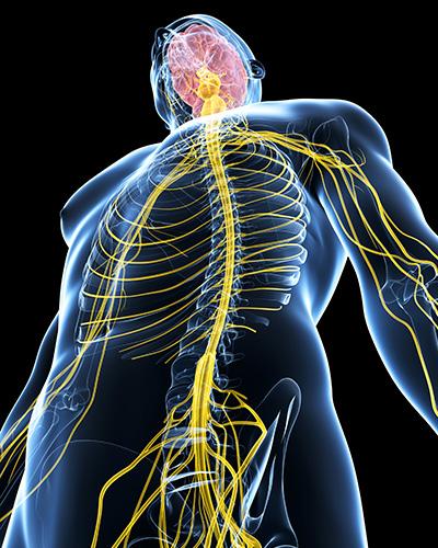 脳と神経の重要性