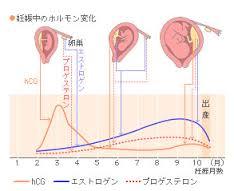 妊娠 ホルモン
